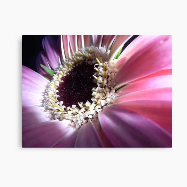 Touch of Enlightment Canvas Print
