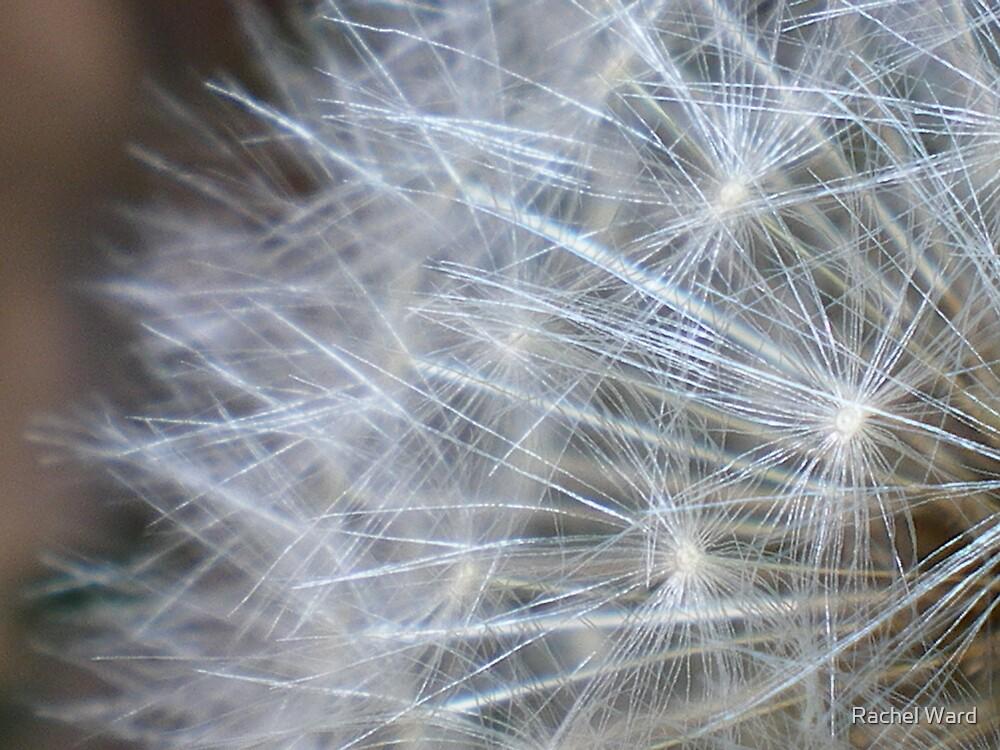 Make a Wish by Rachel Ward