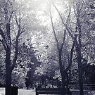 soleil du midi by Aimelle
