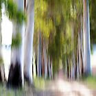 Eucalyptus Avenue ... by Angelika  Vogel