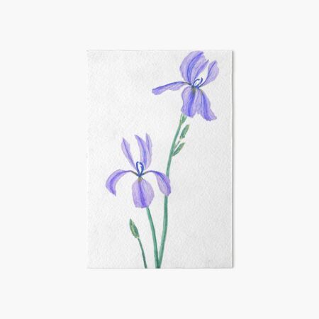 two elegant purple iris watercolor  Art Board Print
