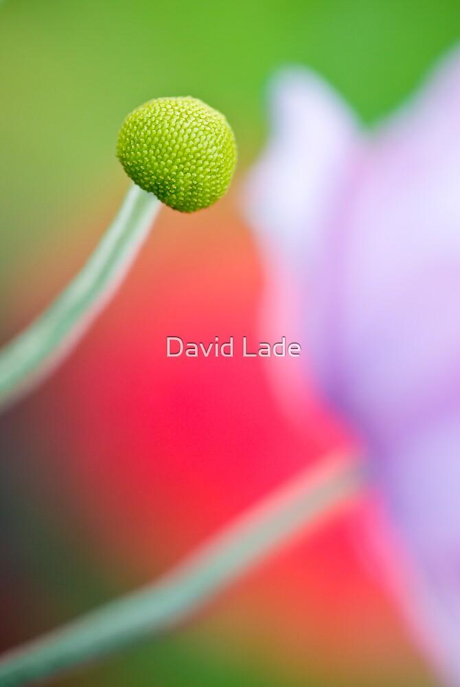 Flouro Peony by David Lade