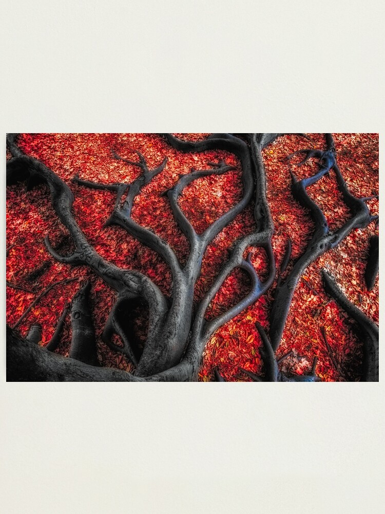 Alternate view of Red Roots Photographic Print
