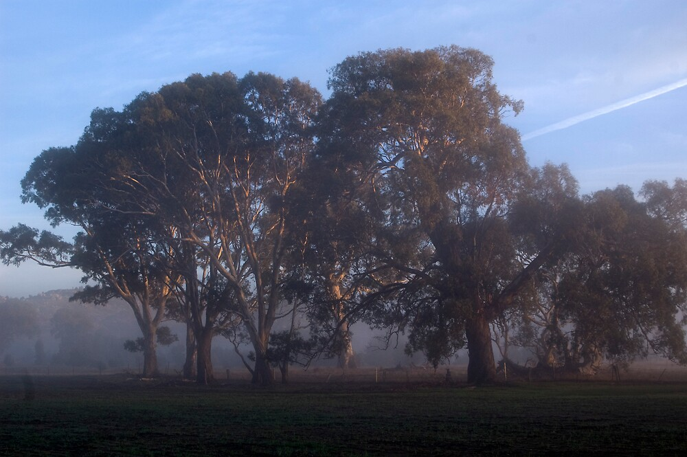 Trees in Morning Mist by Dominque  Sparks