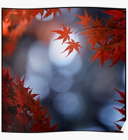 Autumn colours; Yoyogi Park, Tokyo, Japan Poster