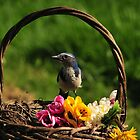 BIRDS THINK ITS SPRINGTIME by RoseMarie747