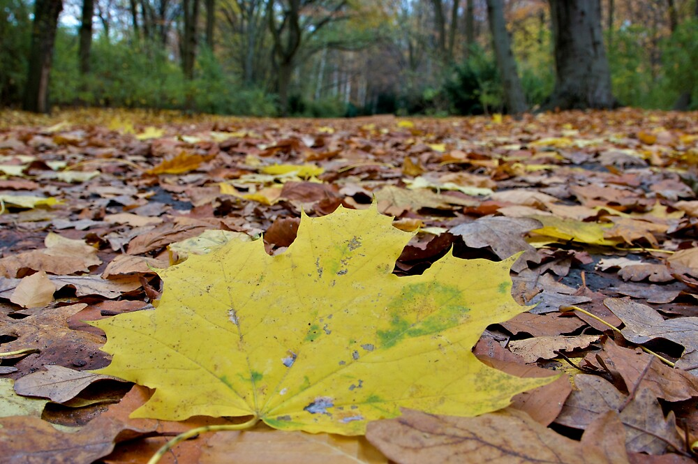 Autumn leaves by richymac