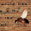 I would like to be a fly on the wall... by Storm Designs