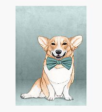 Corgi Dog Photographic Print