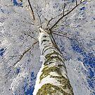 Schneewelten by Aviana