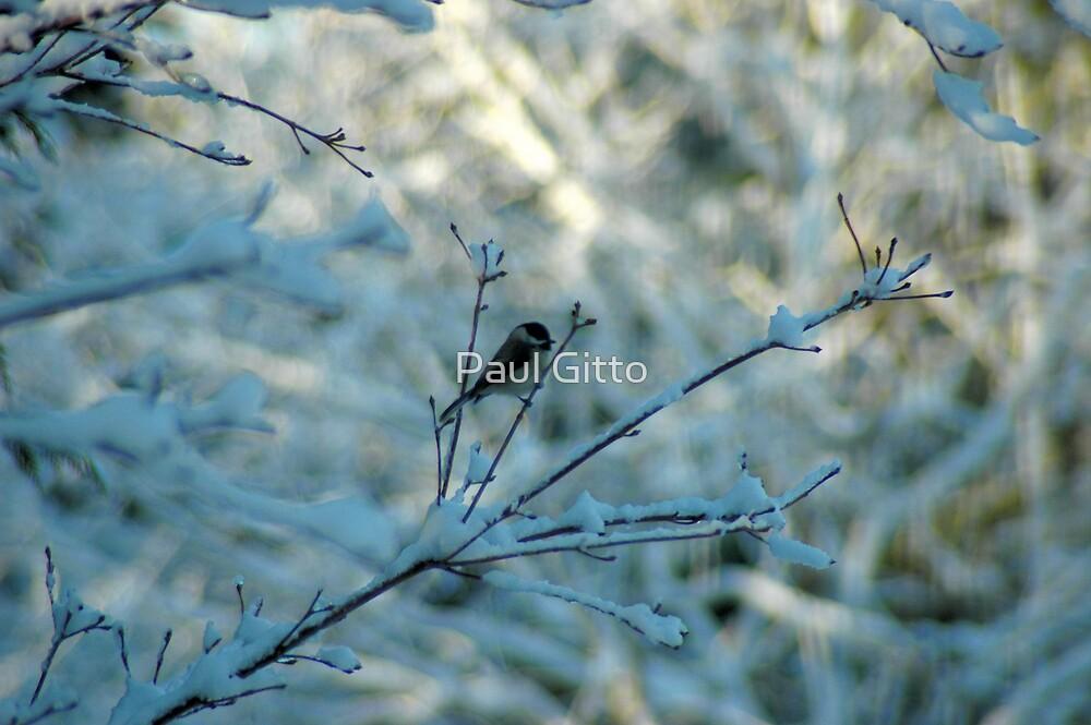 Winter Dreams by Paul Gitto