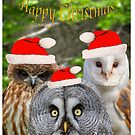 Owls wearing a Christmas hats by Dave  Knowles