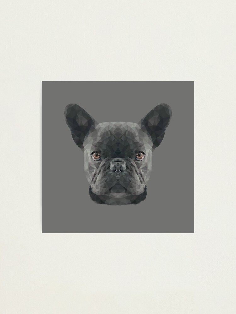 Alternate view of The French Bulldog Photographic Print