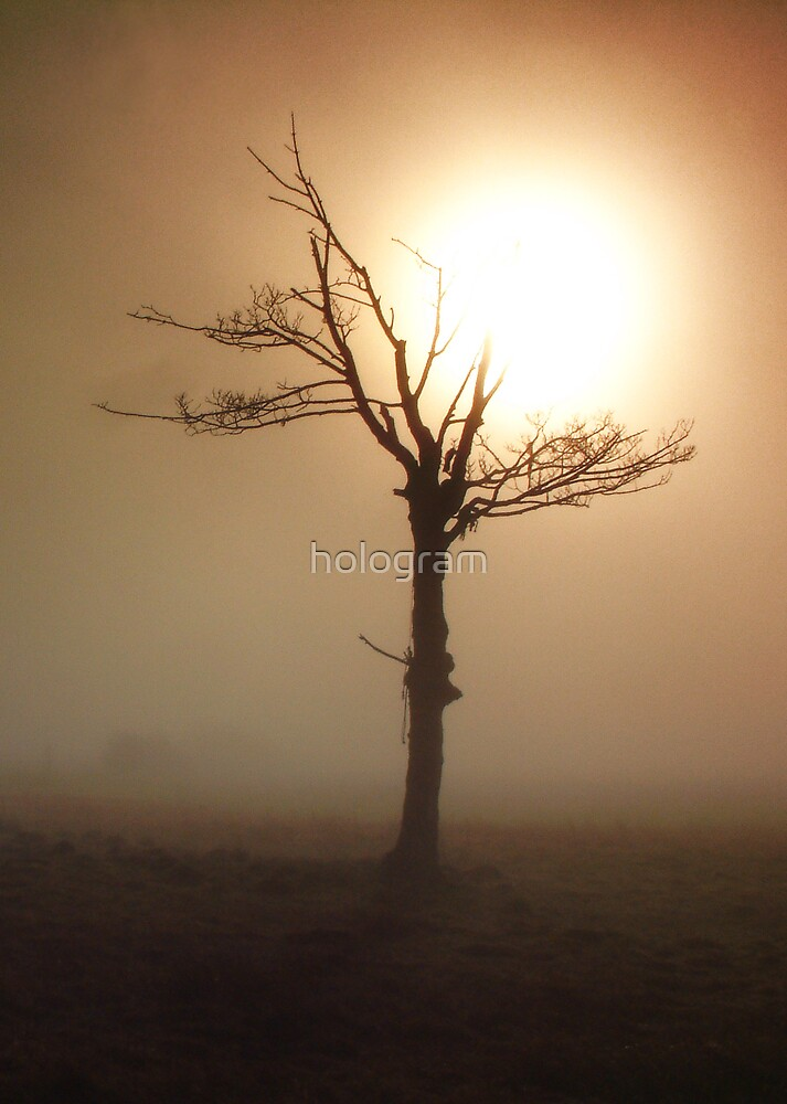 Capture the Light by hologram