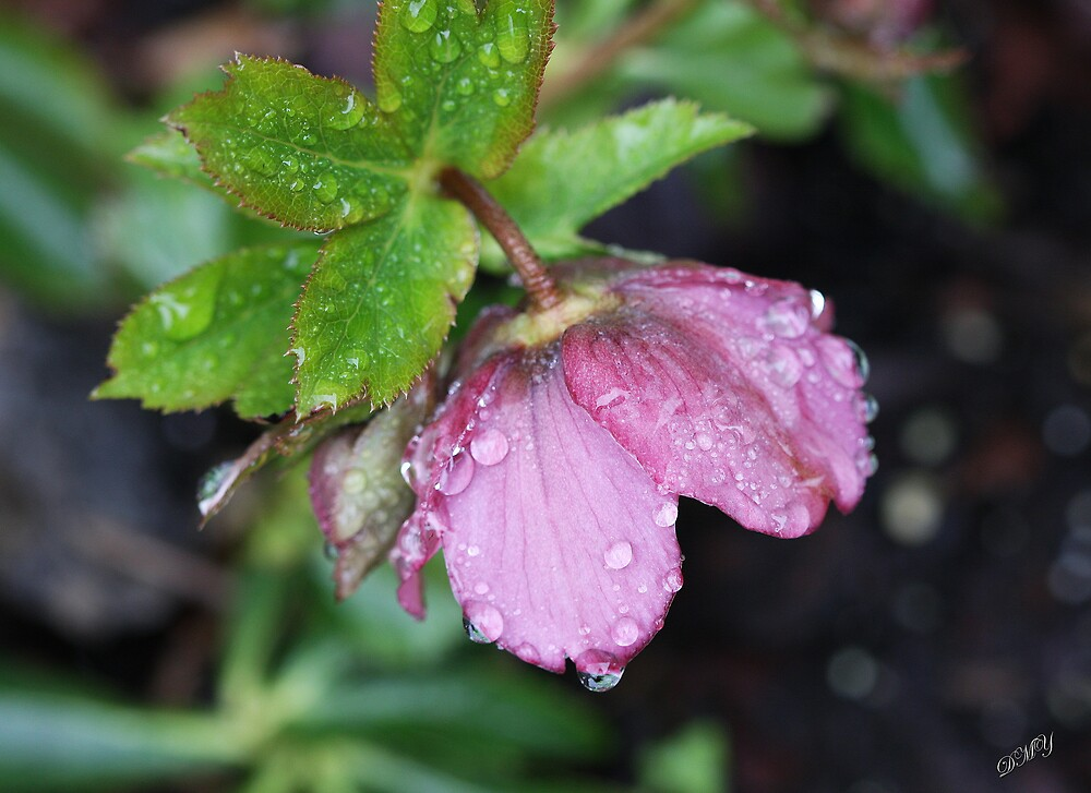 Lenton Rose by shadyuk