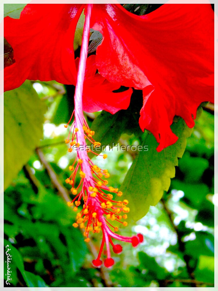 red hibiscus by easternHeroes
