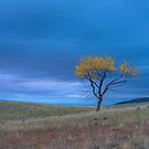 Yellow Tree by Marty Straub