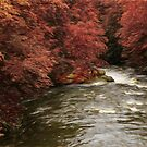 Red Tree River by Marty Straub