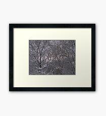 snows here  Framed Print