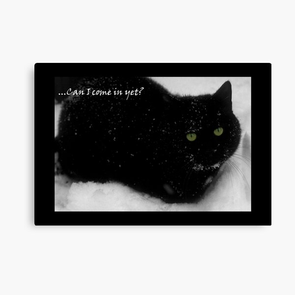The cat who came in from the cold Canvas Print