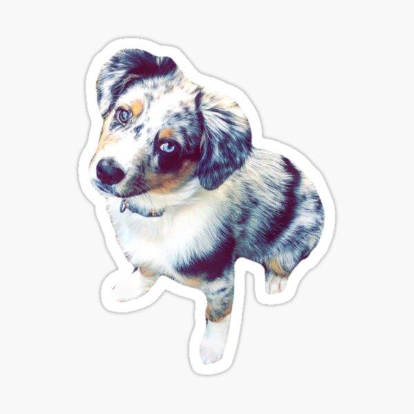 Blue Merle Aussie Pup Sticker