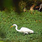 White Bird by Clayton Bruster