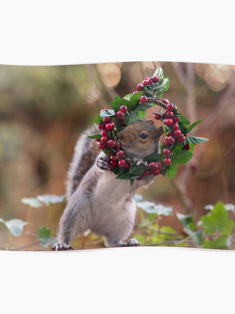 Christmas Squirrel.Christmas Squirrel Poster
