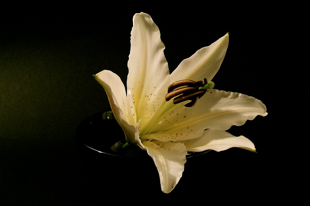 Lilies in the dark  by anisja