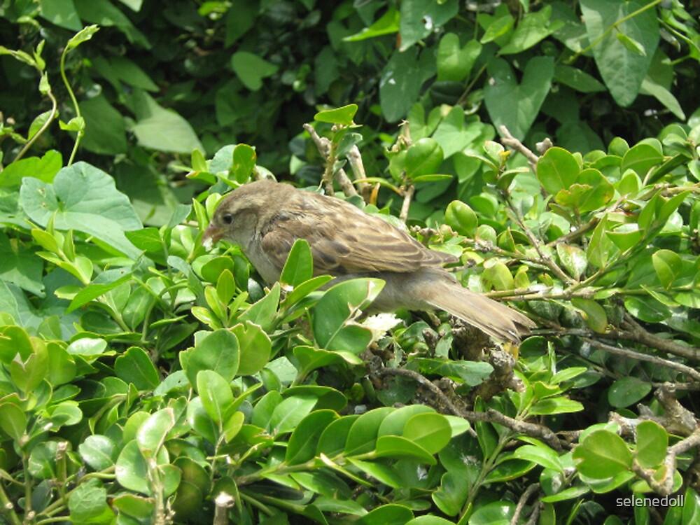 sparrow by selenedoll