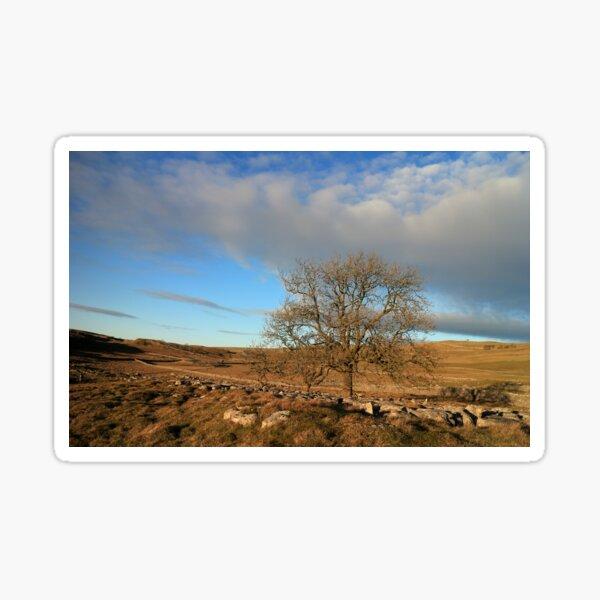 Last Tree Standing Sticker