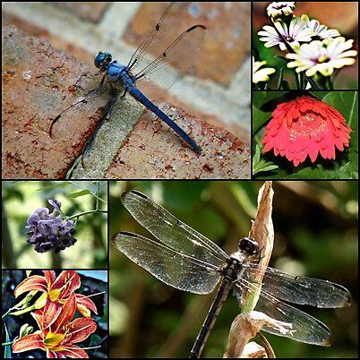Dragonfly Garden by Chirleen Evans
