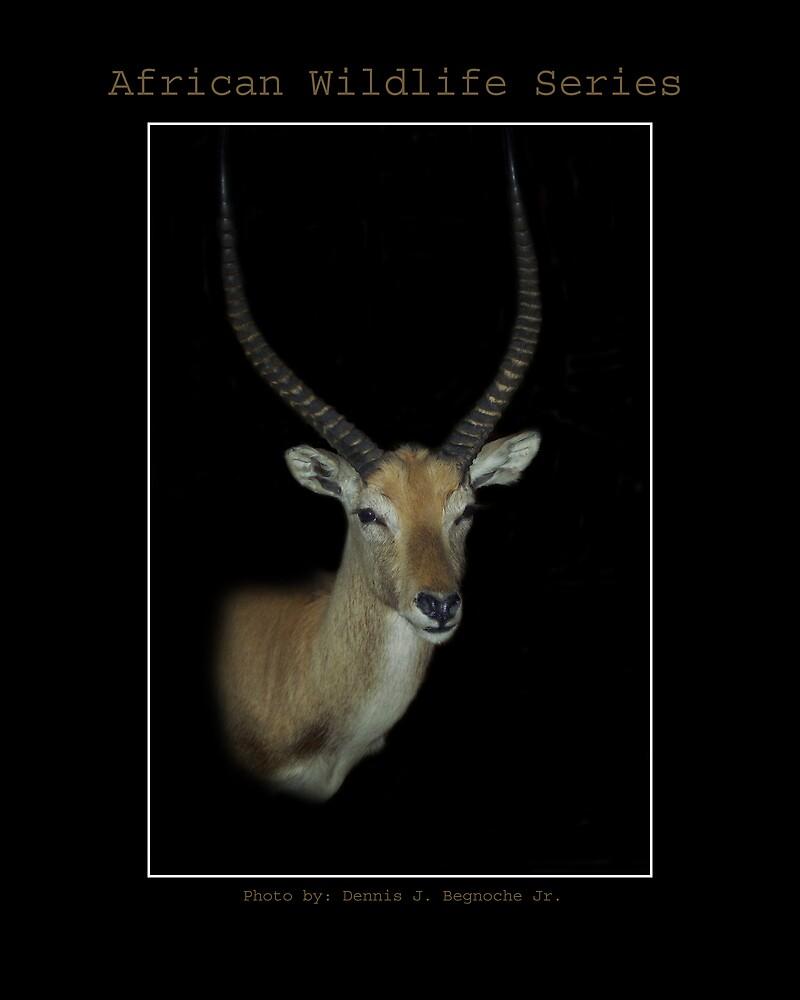 African WildLife Series by Dennis Begnoche Jr.