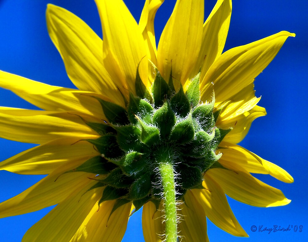 Sunny Day Yellow by Kay  G Larsen