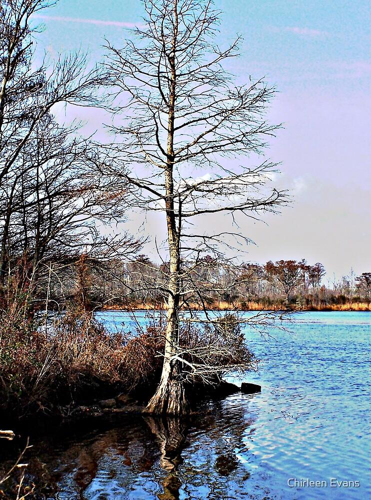 Lone Cypress by Chirleen Evans