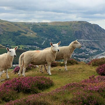 A Close Shave on Allt Wen by RoystonVasey