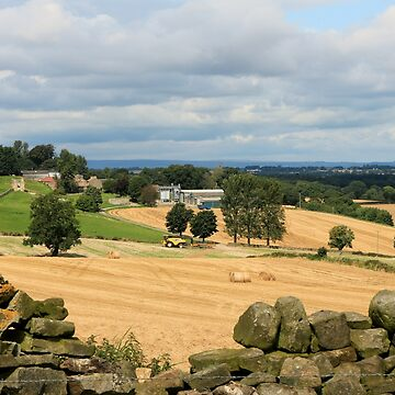 Making Hay Whilst The Sun Shines by RoystonVasey