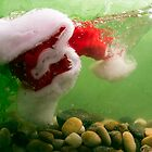 Immersion - Christmas by Alan Organ LRPS