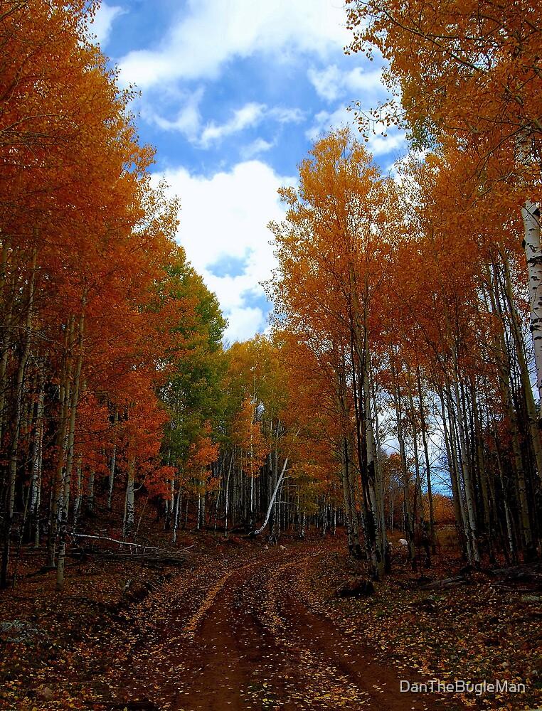 Fall Colors by DanTheBugleMan