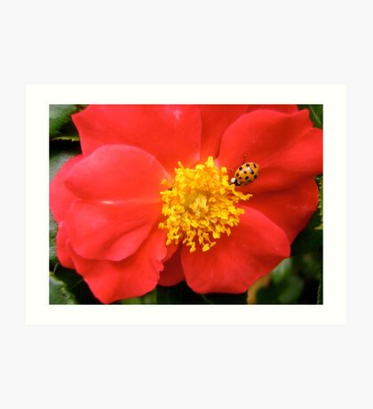 Governor General's Rose 8 - with a visitor Art Print