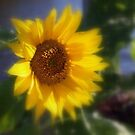 Sunflower by Tiaralynn