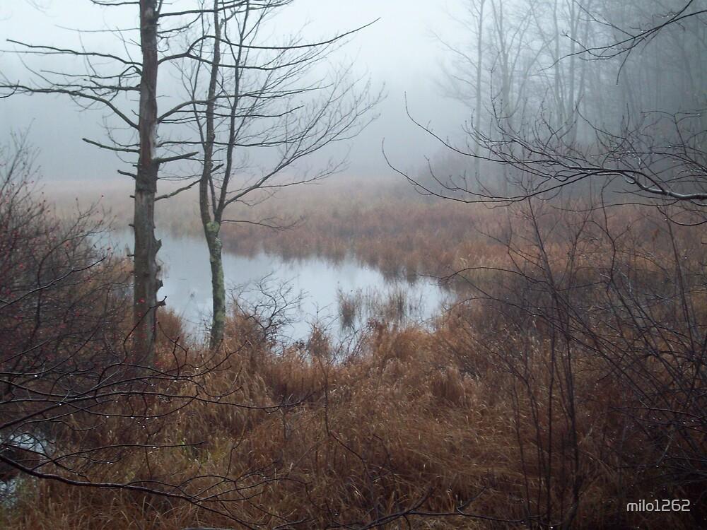 Misty Day by milo1262