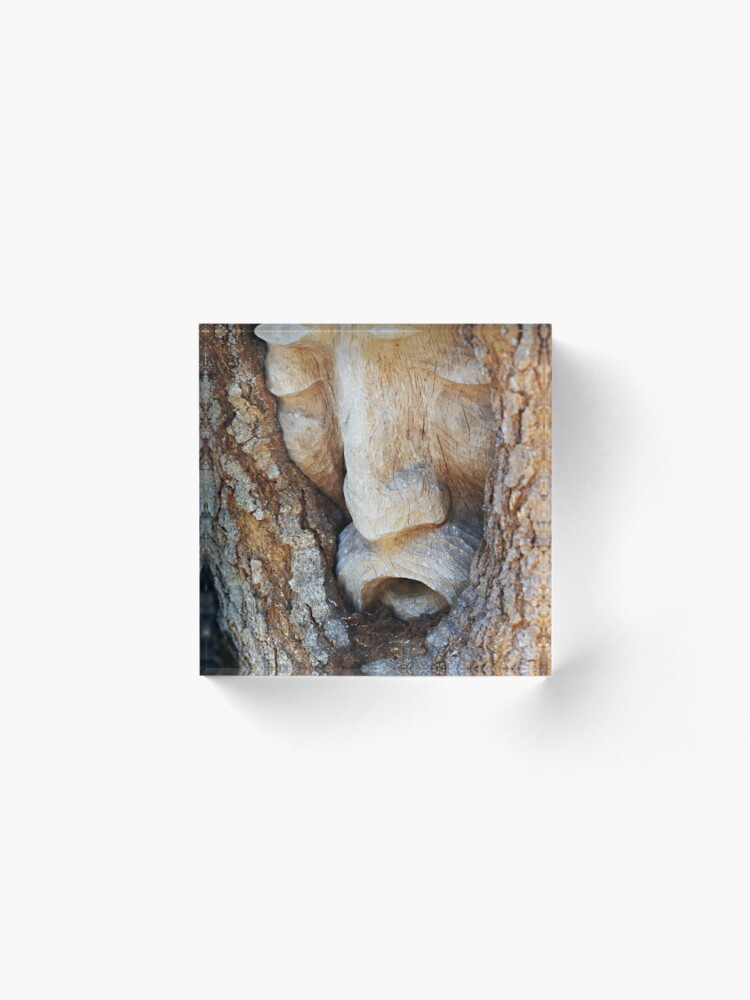Alternate view of Tree Spirit - Magnolia Manor  Acrylic Block