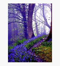 Bluebells in the Forest Rain Photographic Print