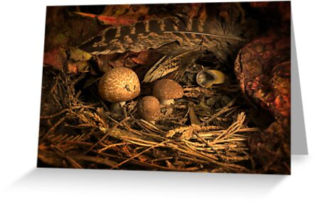 Fungi and Pheasant Feathers by Gazart