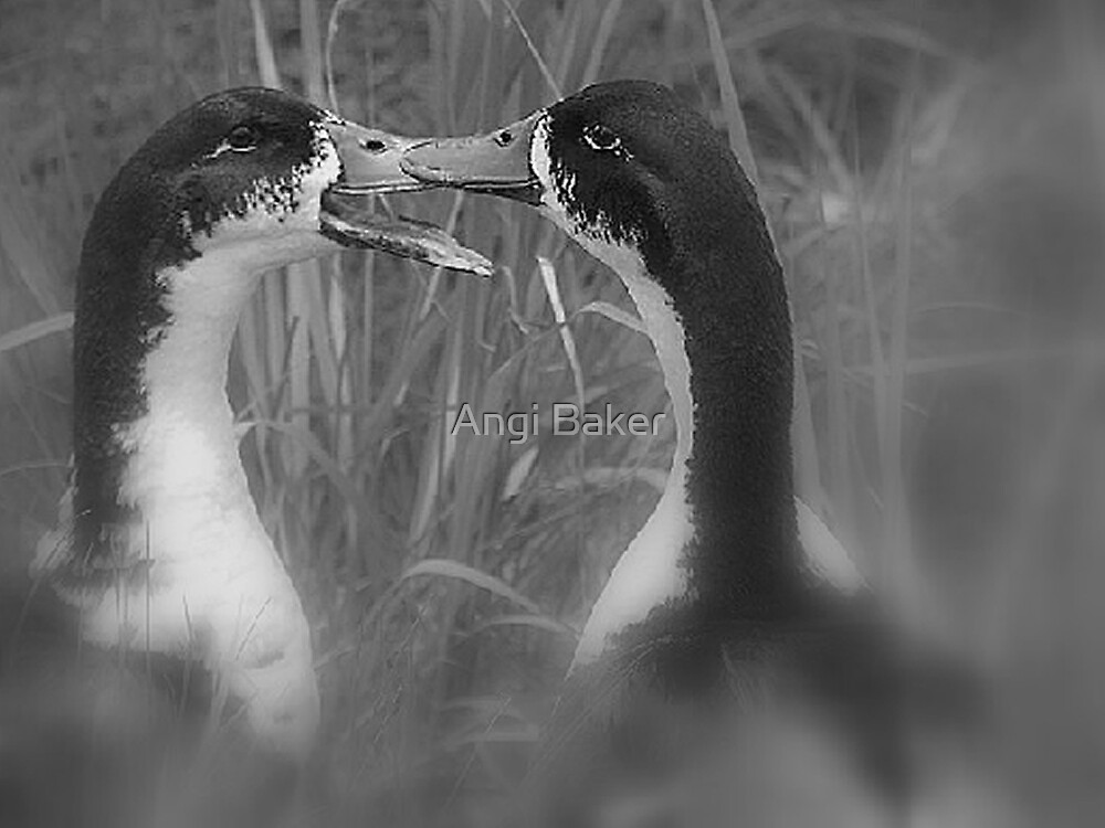 Love At First Sight by Angi Baker