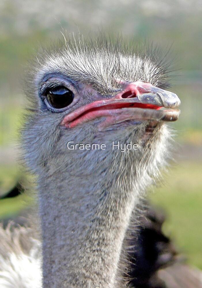 One-eyed Pecker by Graeme  Hyde
