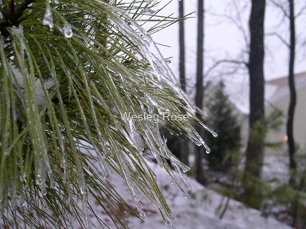 Frozen Drops by Wesley Rose