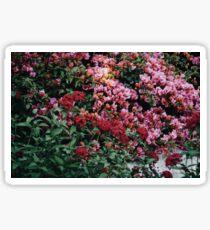 flowers in disneyland Sticker
