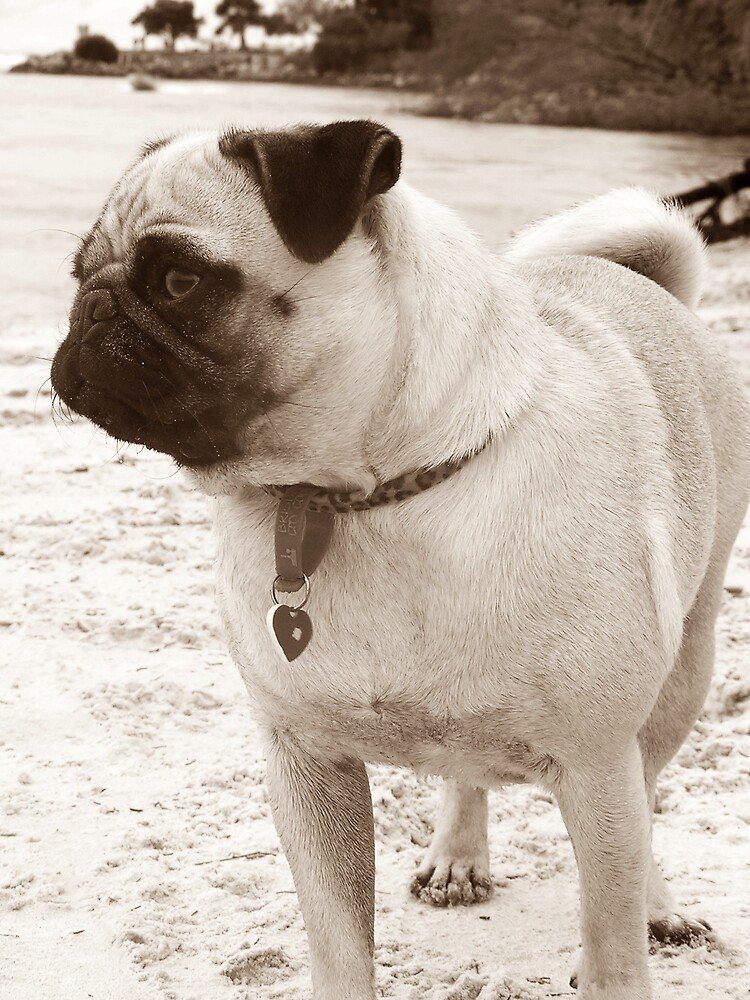 Lola by doltoybreeds