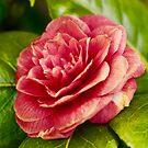 NDVH Flowers 3 by nikhorne